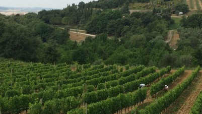 Montalcino Uccelliera vineyards